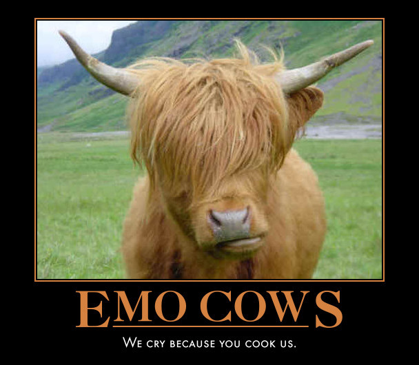 Emo Cows - We cry because you cook us