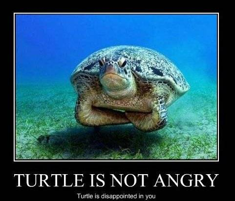 turtle_is_not_angry_-_turtle_is_disappoi